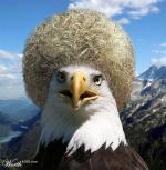 орёл в шапке