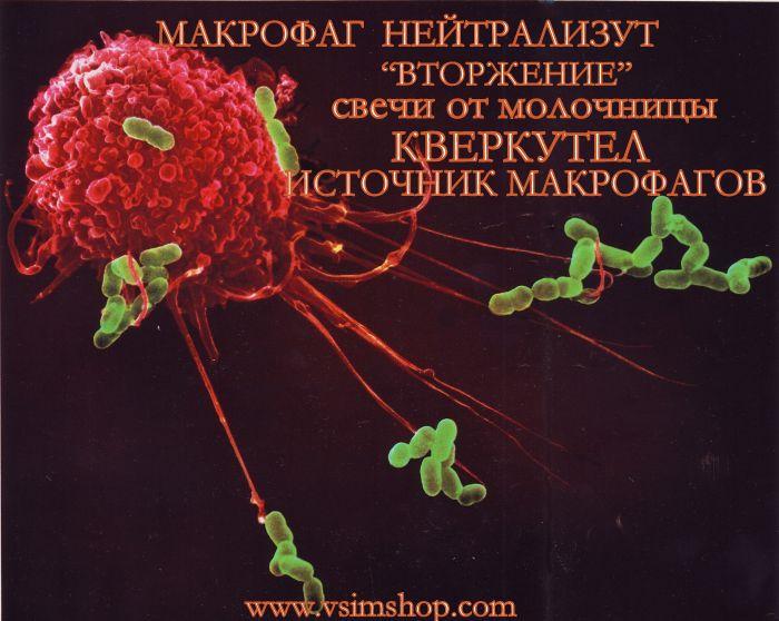 макрофаги нейтрализуЕТ ВТОРЖЕНИЕ